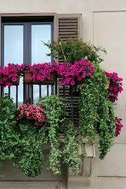 Now Thats A Balcony GardenPlanet Succulent Garden Apartment Gardening Urban Jungle Plants Flowers Vegetable Veggies Patio Terrace