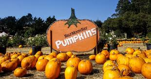 Pumpkin Patch Near Bay Area by 7 Pumpkin Patches In Half Moon Bay To Visit Before Halloween 49