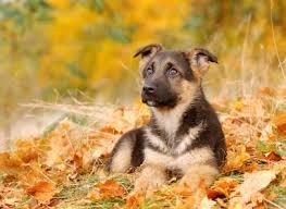 is your dog a top dog top 10 dog breeds listed ez vet pet