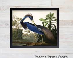Vintage John James Audubon Louisiana Heron Print Bird Prints Dining Room