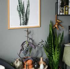 experten tipps zehn zimmerpflanzen die herrlich