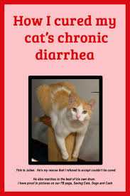 Pumpkin Gave Dog Diarrhea by Best 25 Cat Diarrhea Ideas On Pinterest Pet Health Puppy Care