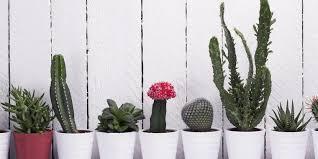 dekoration für die fensterbank der kaktus ist wieder da