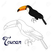 Adult Coloring Page Free Download Toucan New Free Printable Adult