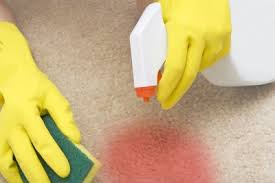 How Remove Paint From Carpet by How To Remove Paint From Carpet Painttips Find A Painter Tips