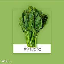 Color Palette Inspiration Salad Green 94bb5d Color