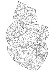 Anatomical Heart Coloring Book Vector For Adults