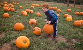 North Plains Pumpkin Patch by 15 Pumpkin Patches In The Portland Area That Are Worth A Family