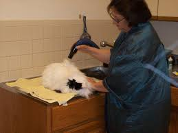arlington cat clinic arlington cat clnic boarding and grooming