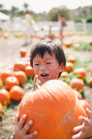 Cal Poly Pumpkin Patch 2016 by Personal U2014 Dez And Tam Photography