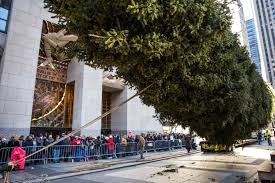 Christmas Tree Rockefeller 2017 by 2017 Rockefeller Center Christmas Tree Has Arrived In Nyc Photos