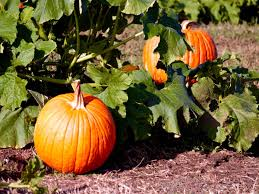 Pumpkin Patch Austin Texas 2015 by 10 Must Follow Austin Instagram Accounts For Museumweek Curbed