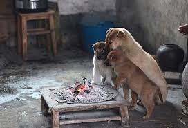 Cute Puppies Barking Cold Stove 1