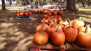Fowler Pumpkin Patch Hours by Community Events U0026 Things To Do In Tampa Florida 813area Com Events