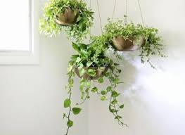 Best 25 Plants In Bedroom Ideas On Pinterest
