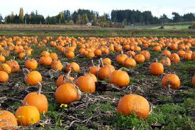 Pumpkin Patch Fresno Ca Hours by 14 Reasons Why Fall Is The Best Season