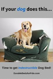 Top Rated Orthopedic Dog Beds by 14 Best Indestructible Dog Beds Reviews Images On Pinterest Dog