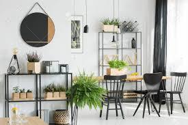 farn nahe regal im einfachen esszimmer mit schwarzen stühlen bei tisch spiegel auf wand und hölzernem zubehör