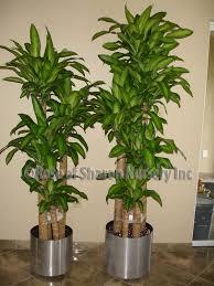 Enchanting 20 fice Plants No Light Design Decoration Best 25