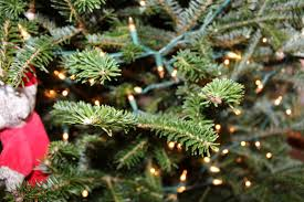 Silvertip Christmas Tree by Order Processing Christmas Tree Brooklyn