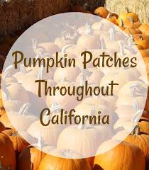 Wheatland California Pumpkin Patch by Pumpkin Patches Throughout California California Mom Bloggers