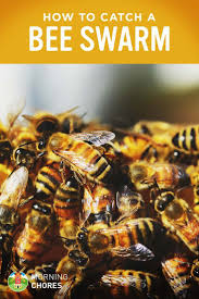 301 Best Bees Images On Pinterest | Bee Keeping, Honey Bees And ... How To Keep Bees A Beginners Guide Bkeeping Deter And Wasps And Identify Which Is Family 2367 Best Homestead Animals Images On Pinterest Poultry Raising Best Bee Hives Images Photo Wonderful To Away Become A Backyard Bkeeper Fixcom Why Your Child Needs Working Bee Urban Honey Back Yard Made Simple Image On Marvellous 301 Keeping Bees 794 The Complete 7step Chickens In Plants That Simplemost