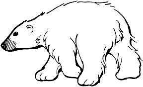 Coloring Bear Pages Preschool
