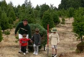 Santa Cruz County Christmas Tree Farms by Day Trip Christmas Tree Farms In Half Moon Bay And Beyond