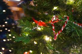 Christmas Tree Shop Deptford Nj Number by 8 Places To Buy A Christmas Tree In South Jersey Bumblebee Tree