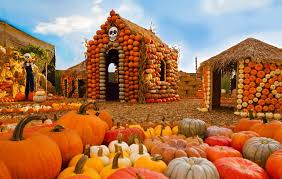 Underwood Farms Pumpkin Patch Hours by The Best Pumpkin Patches In Los Angeles