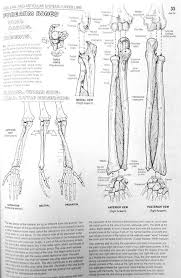 Anatomy Coloring Book Unit 7 Elbow Injuries Miss L Williams