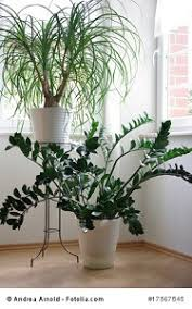 grünpflanzen im schlafzimmer schädlich oder nicht