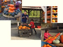 Sunnyside Pumpkin Patch by The Best Pumpkin Patches Near Seattle Mapped Craven Farm