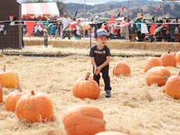 Pumpkin Patch Rides by Spina Farms Pumpkin Patch U2013 It U0027s Becoming A Tradition 2 Blonde Mamas