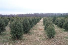 Christmas Tree Hill Shops Lancaster Pa by Where To Choose And Cut Your Own Christmas Tree Near Charlotte Nc