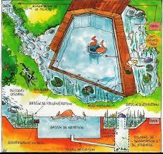 schéma piscine naturelle piscine naturelle