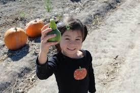 Pumpkin Patch Utah South Jordan mabey farms pumpkin patch u2013 west jordan ut raising beasties