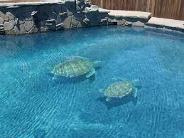 changing the look of swimming pools 3d ceramic tile
