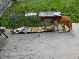 live cat trap feral cat trapping