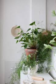Plants In Bathrooms Ideas by 29 Best For The Garden Images On Pinterest Plants Gardening
