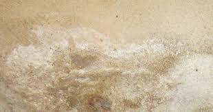 ist salpeter am mauerwerk gefährlich ratgeber salzausblühungen