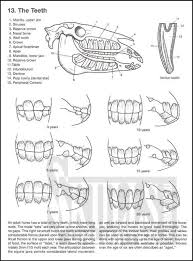 Photo In Ve Simple Animal Anatomy Coloring Book