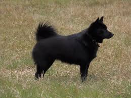 Shed Free Lap Dogs by 10 Smaller Dog Breeds That Make Great Outdoor Companions U2013 1816 By