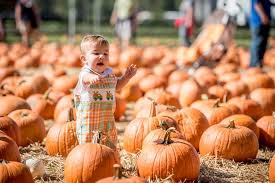 Free Pumpkin Patch Charleston Sc by What You Need To Know Pumpkin Patch Programs Boone Hall