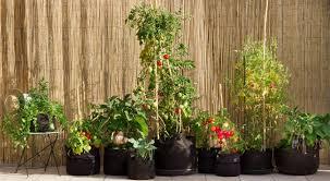la culture potagère en bacs ou en pots jardin2m