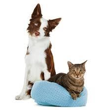 cat cat supplies kitten accessories products petsmart