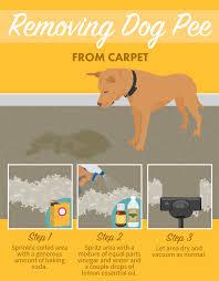 Fresh Drop Bathroom Odor Preventor Ingredients by Best 25 Dog Ideas On Pinterest Dog Smell Dog On