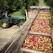 Pumpkin Picking Maine 20 best places to go apple picking in the northeastern u s