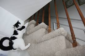 cat stairs story cat climbs stairs with dogs and cats