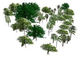 sketchup components 3d warehouse super modelers botanic garden trees